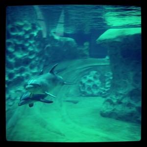 GA Aquarium Dolphins