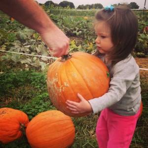 addie-pumpkin2013