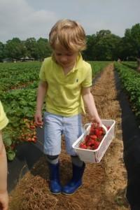 CFstrawberries1